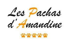 Les Pachas d'Amandine Villaz