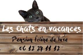 Les Chats en vacances Castillon du Gard