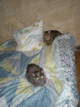 Praline & Luffy