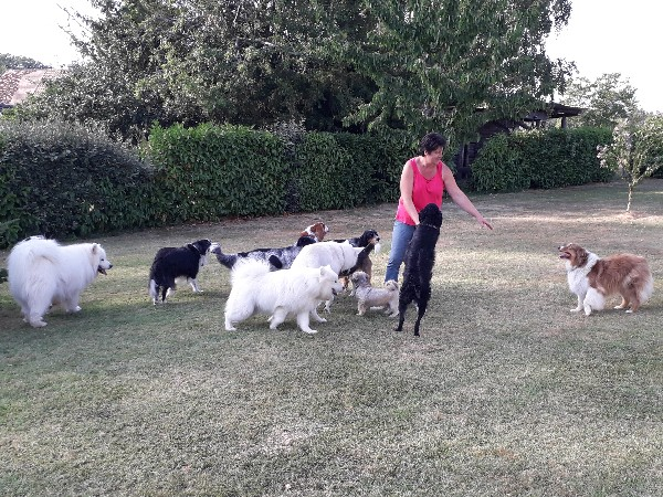Ma pension colo est là pour accueillir les chiens sociables. Les toutous sont en libertés autour de ma maison avec un jardin de + de 3000 m² bien clôturé.Ils sont en box individuels que le soir pour y dormir et y manger.