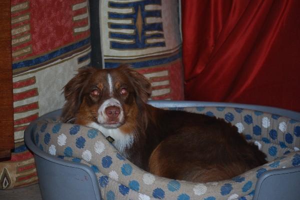 Molly attend les câlins avant de s'endormir.